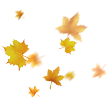 —Pngtree—floating leaves autumn falling yellow_4036749